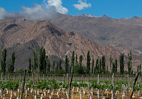 Visit the winery in Cafayate